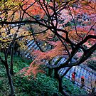 Japan - Autumn 12 by Glenn Browning