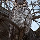 Great Horned Owl by utahwildscapes
