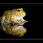 African bullfrog by AngiNelson