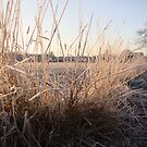 Cold Grass by sweetairhead