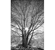 Winter Spread Photographic Print