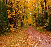 Yellow Fall Drive (Vertical) by JohnDSmith