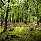 Green trees around Lake Buttermere, Lake District, UK by Elana Bailey