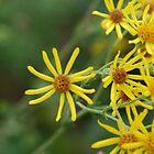 Yellow Flower Burst Two by Jimmy Deas