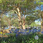 Children's Play Area - Victoria Park, Sydney, NSW. by C J Lewis