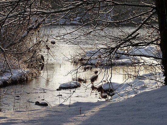 River Wharfe, Arthington by acespace