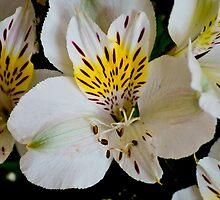 White tiger lily lg by pcfyi