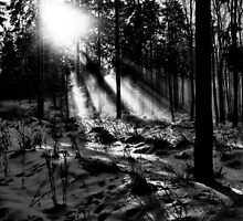 Streaks Of Sunlight - black & white by Daniel Quade
