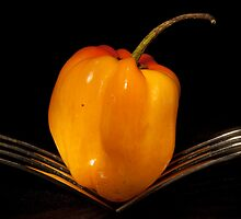 Orange pepper by Alexa Clement