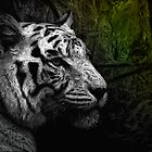 White Tiger by Marsea
