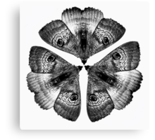 Patterns in Nature - Moths Canvas Print