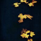 Velvet Leaves by Sybille Sterk