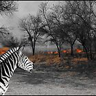 Zebra and Bush Fire by ten2eight