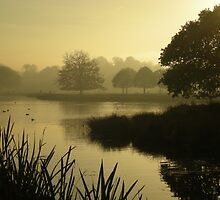 Misty Tatton by DMHotchin