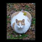 Felis Catus - White And Orange Domestic Stray Cat  by  Sophie Smith