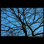 Branch Structure Against Blue Sky by © Sophie W. Smith