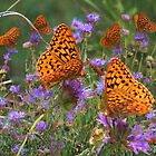 Shimmery Fritillary by Arla M. Ruggles
