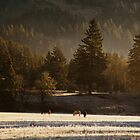 Horses in the Morning by Matt Emrich