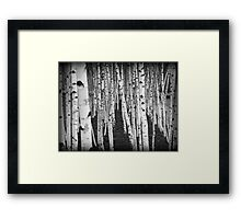 Silver Birch Trees Framed Print