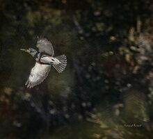Kingfisher in Holly Hill by Deborah  Benoit