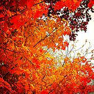 Fall colors on a gray day by jammingene
