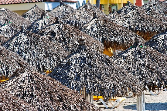 Palapa by richard  webb