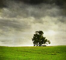 The Lone Tree by Robyn Carter