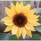 Sunflower (2) by sigriff