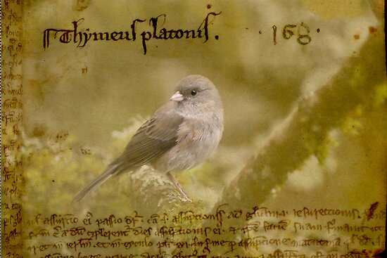 Sparrow from the Middle Ages. by Kerry McQuaid
