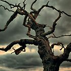 Dark Tree by Great North Views
