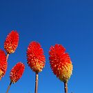 Red flowers on blue sky by Jose Saraiva