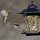 Action At The Feeder by photodug