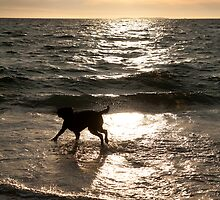 Dog Beach Sunset, Fremantle, Perth, Australia by Jane McDougall