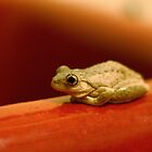 Frog on the Basin by Erland Howden