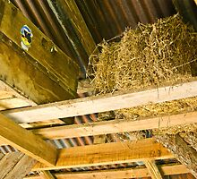 The Hay Loft by mamasita