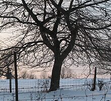 Oak in winter behind wire fence  by Liesl Gaesser