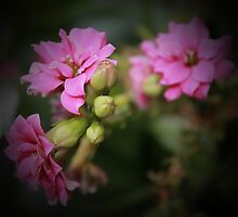 Pink Flowers by rubyrainbow