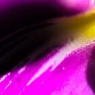 wild flower in violet and yellow by ctrlartgraphic