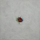 Ladybug by Michael Creese
