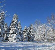 Winter Wonderland by Linda Miller Gesualdo