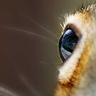 I got my eye on you !  by Bine