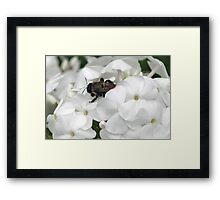 A Busy Visitor Framed Print