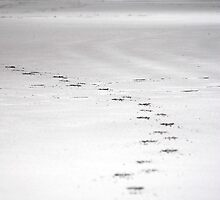 Footsteps at Watergate by DMHotchin