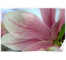 Magnolia Blossom's Fleeting Perfection Poster