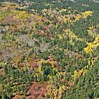 Aerial of Autumn by Margaret  Hyde