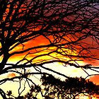 Sunset and tree silhouettes by The Creative Minds