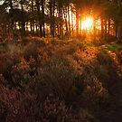 Sunlight On The Heather by ImageMonkey