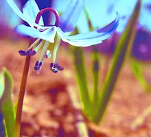 Blue Wildflower by SaradaBoru