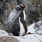 Penguins of Antarctica by Karl David Hill