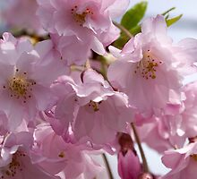 Spring is Soft and Pink by Gene Walls